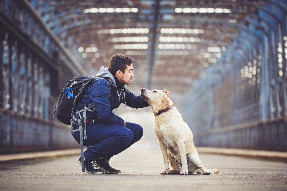 emotional support animals on airplanes